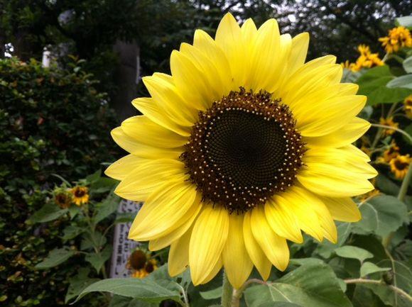 image from http://kyoko.weblogs.jp/.a/6a0120a68548c1970b015434d42b2a970c-pi