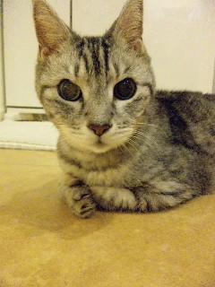 image from http://kyoko.weblogs.jp/.a/6a0120a68548c1970b014e8c3880af970d-pi