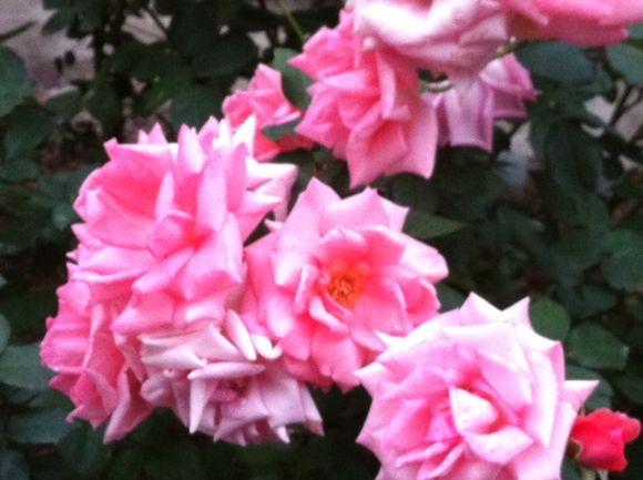 image from http://kyoko.weblogs.jp/.a/6a0120a68548c1970b015392cca430970b-pi