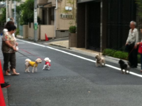 image from http://kyoko.weblogs.jp/.a/6a0120a68548c1970b015390d77935970b-pi
