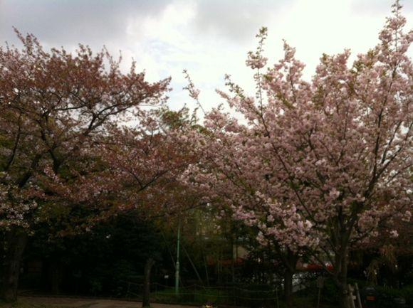 image from http://kyoko.weblogs.jp/.a/6a0120a68548c1970b0168ea3bc769970c-pi