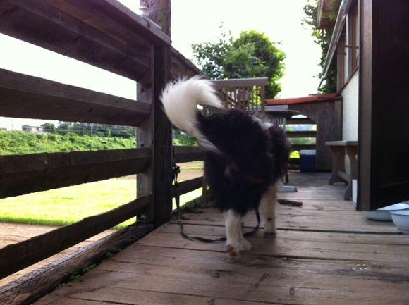 image from http://kyoko.weblogs.jp/.a/6a0120a68548c1970b016768834321970b-pi