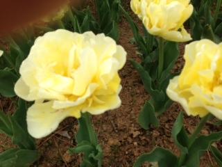 image from http://kyoko.weblogs.jp/.a/6a0120a68548c1970b017ee9cd1465970d-pi